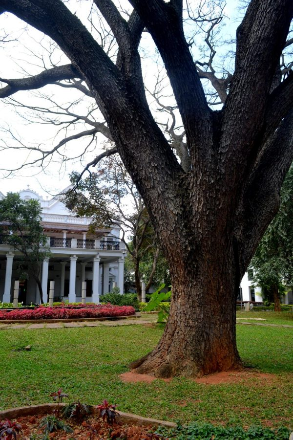 The National Gallery of Modern Art in Bangalore has some of Bangalores oldest trees.